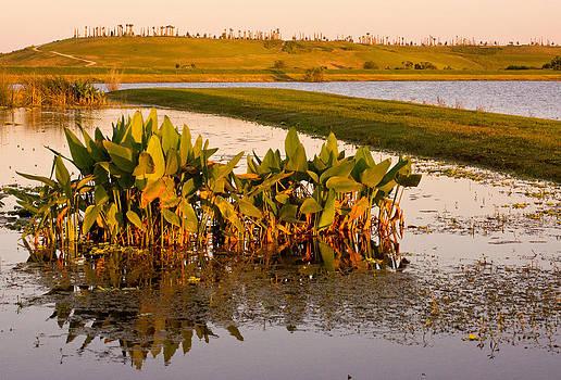 The Celery Fields in Sarasota by John Myers