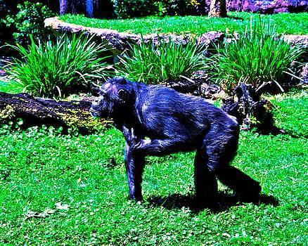 The Chimp by Lisa Merman Bender