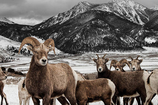 The Clan by Stormy Wilson