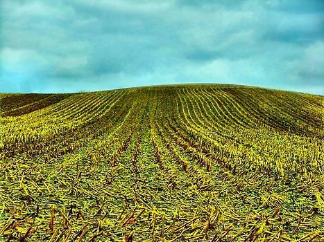 Julie Dant - The Corn Rows