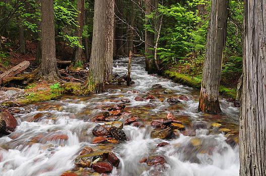 The Creek - Glacier National Park - Montana by Bruce Friedman