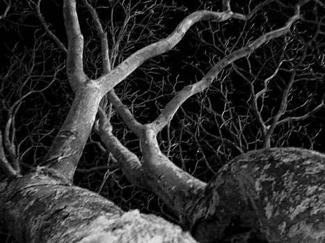 The Dark and the Tree 2 by Fabio Giannini