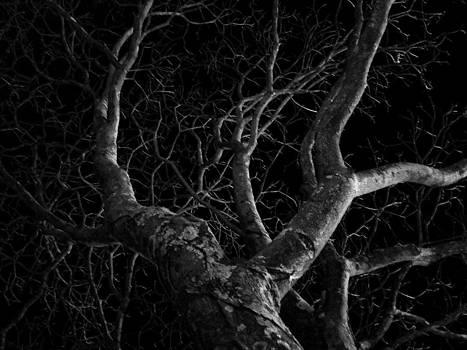 The Dark and the Tree by Fabio Giannini