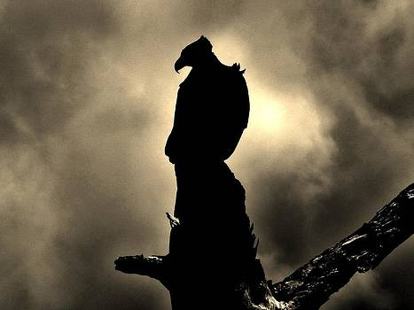 The Dark Knight by Robert Geary