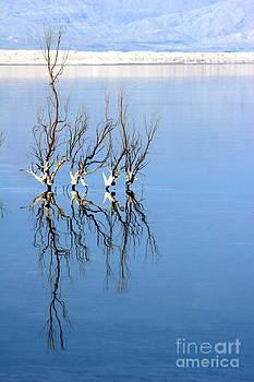 The Dead Sea by Arie Arik Chen