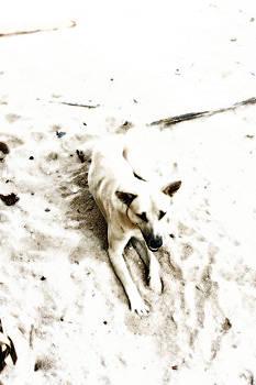 The dog by Yusron Rohim