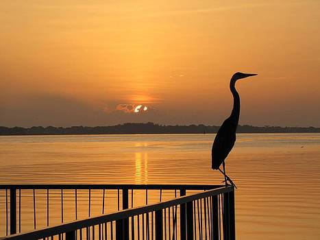 The Early Bird by Beverly Reaume