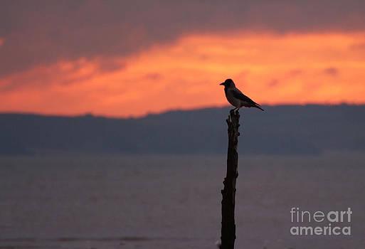 Joe Cashin - The Early bird