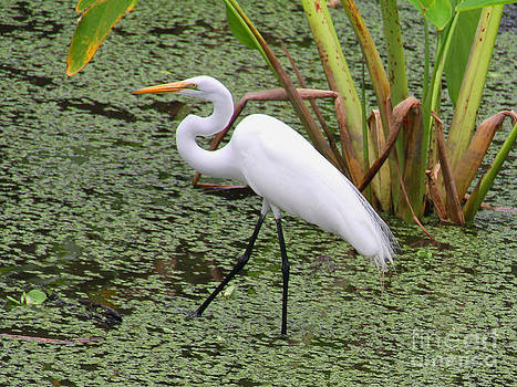 The Egret by Rosemary Aubut