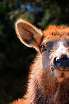 Emily Stauring - The Elk Look