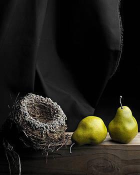 The Empty Nest by Krasimir Tolev