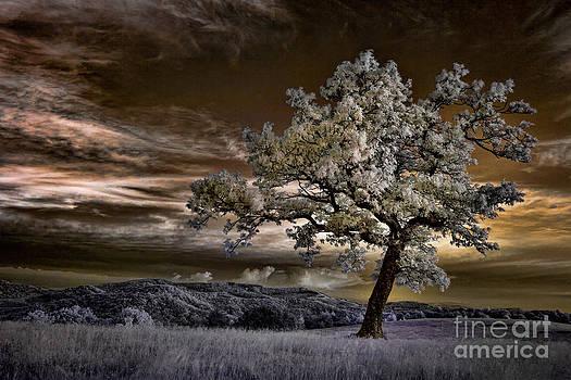 The Enchanted Tree - Blue Ridge Parkway by Dan Carmichael