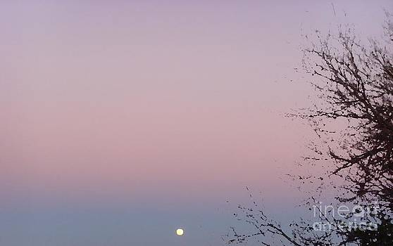The Ephemeral Twilight by Alexander Van Berg
