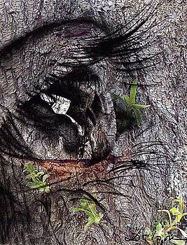 The eye of the forest by Delona Seserman