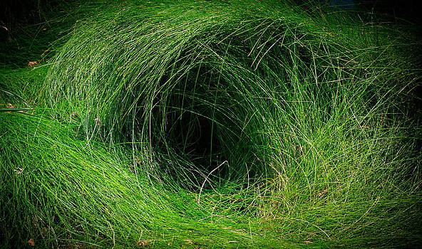 The Eye by Philip Chiu