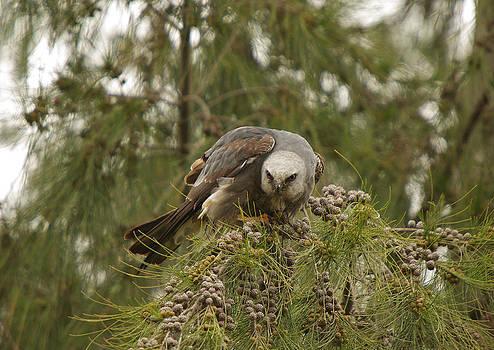 The Eyes Of A Raptor by Steve Wolfe