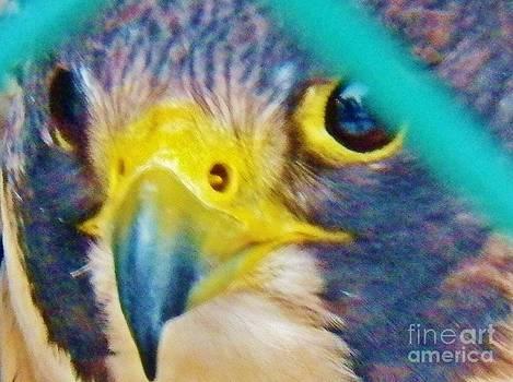 Judy Via-Wolff - The Falcon 2