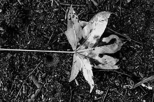 The Fallen Leaf by Brandon Hussey