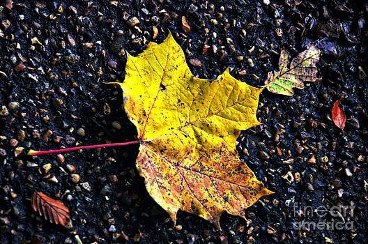The Fallen leaf by Daniela White