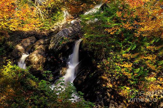 Brenda Giasson - The Falls