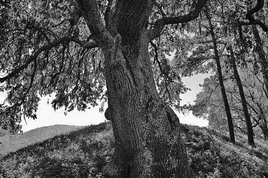 Paulette Thomas - The Family Tree Black and White