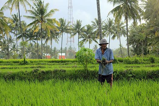 The Farmer by Yusron Rohim