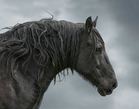 The Friesian by Katie Abrams