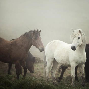 The Gathering Fog by Irene Suchocki