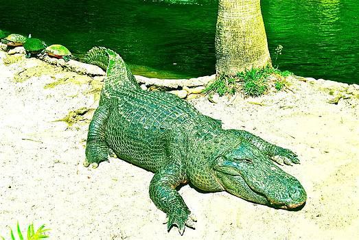 The Gator by Lisa Merman Bender