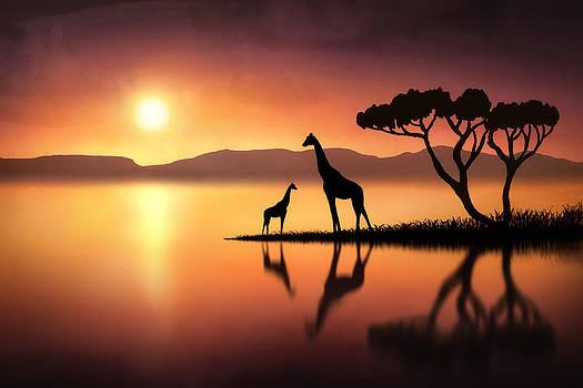 The Giraffes at Sunset by Jennifer Woodward
