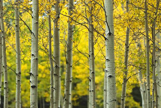 Saija  Lehtonen - The Golden Forest
