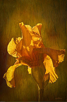 Randall Branham - The Golden Iris