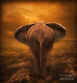 The Golden Savanna by Lynn Jackson