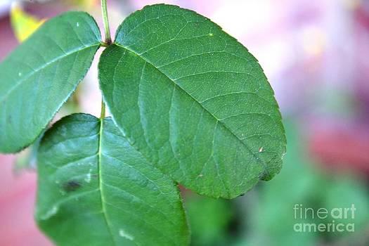 The Green Leaf by Aqil Jannaty