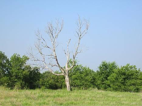 The Hanging Tree by Rosalie Klidies