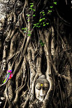 The Head of sandstone Buddha in tree roots at Thailand by Keerati Preechanugoon