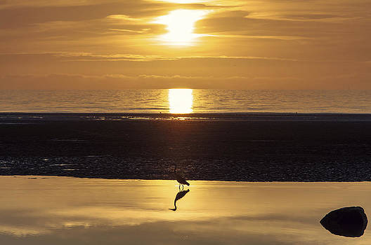 The heron by Nick Barkworth
