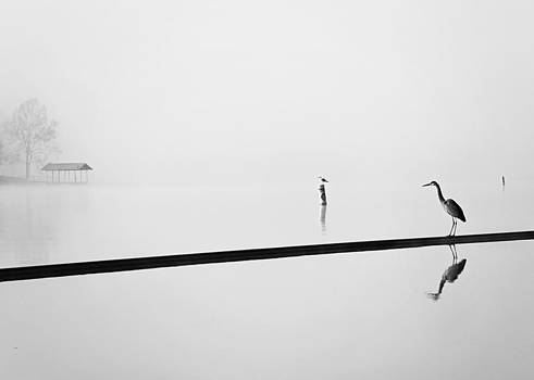 The Heron the Gull and the Dock by Jessie Gould