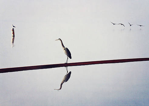 The Heron the Gull and the Geese by Jessie Gould