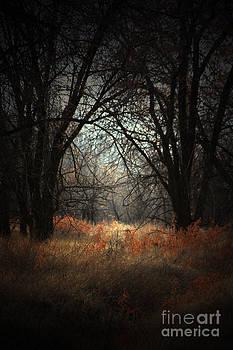 The Hidden Door by C E Dyer