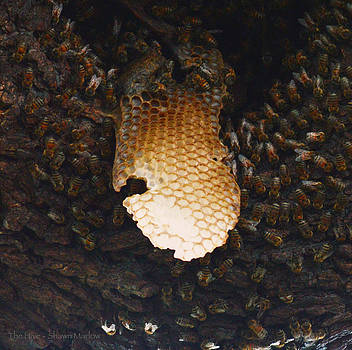 The Hive  by Shawn Marlow