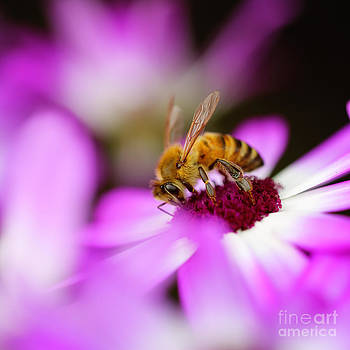 LHJB Photography - The honey bee