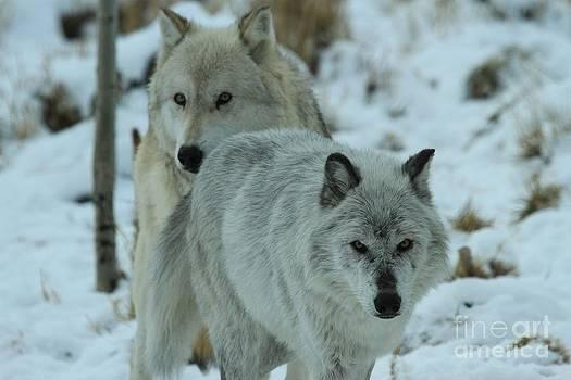 Adam Jewell - The Hunters