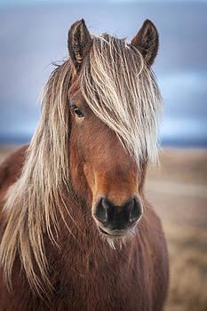 The Icelandic horse by Petur Mar Gunnarsson