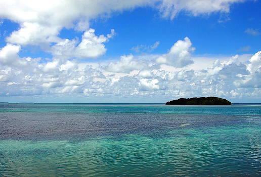 The Island by Amy McDaniel