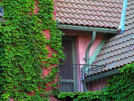 The Ivy Window by Elaine Haakenson