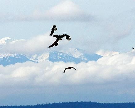 The Joy of Flight by Daryl Hanauer