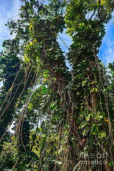 Jamie Pham - The Jungle