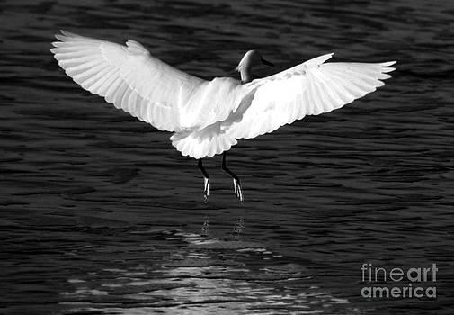 The Landing by Linda Mesibov
