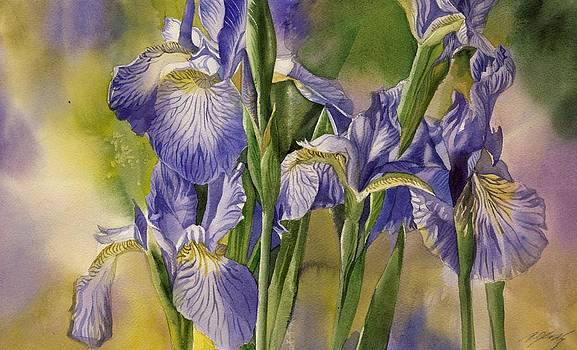 Alfred Ng - the last blue irises